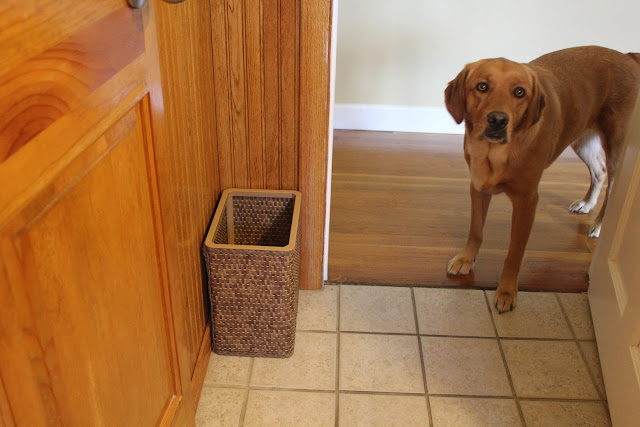 golden lab dog tries to sneak in bathroom for strange addiction