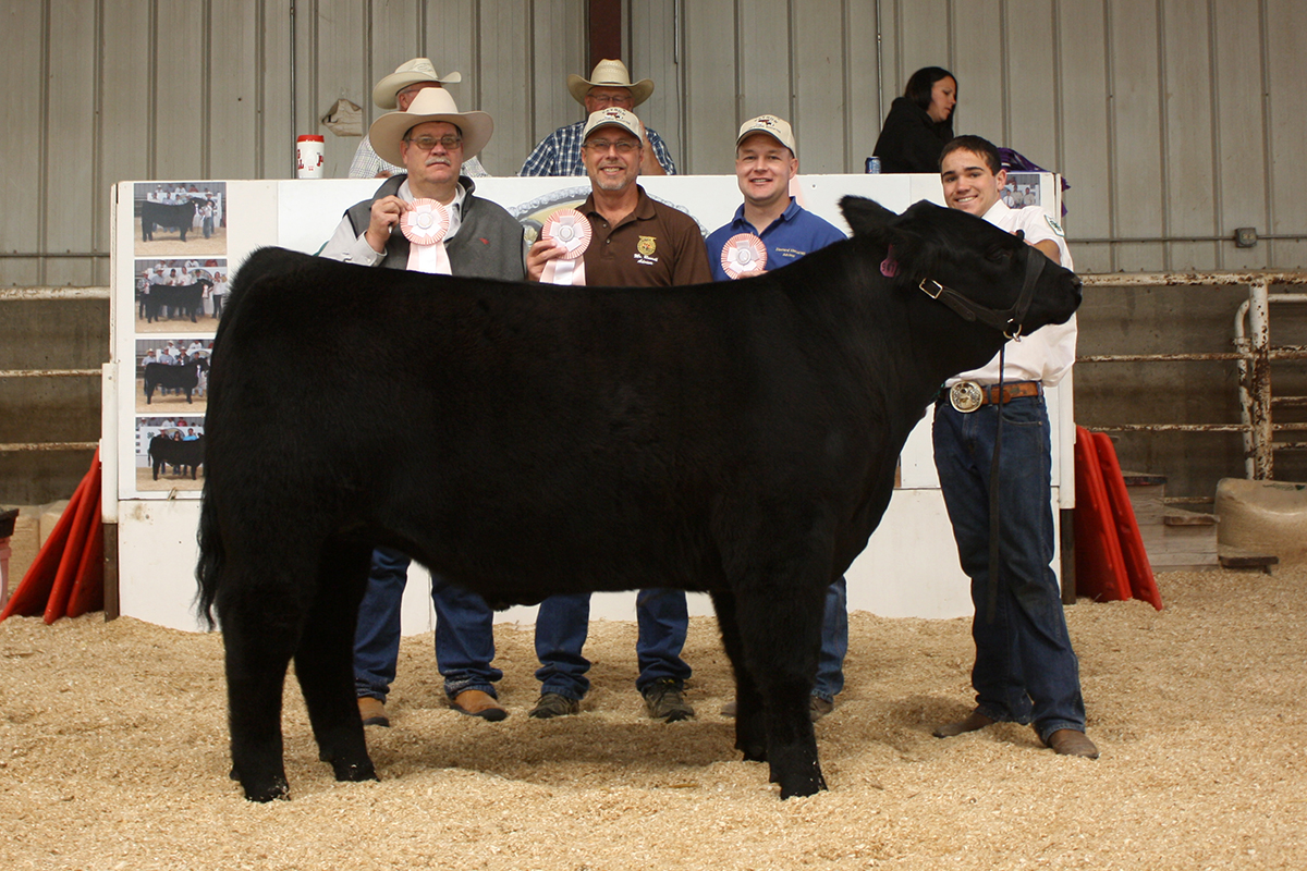 2013 Reserve Champion Steer