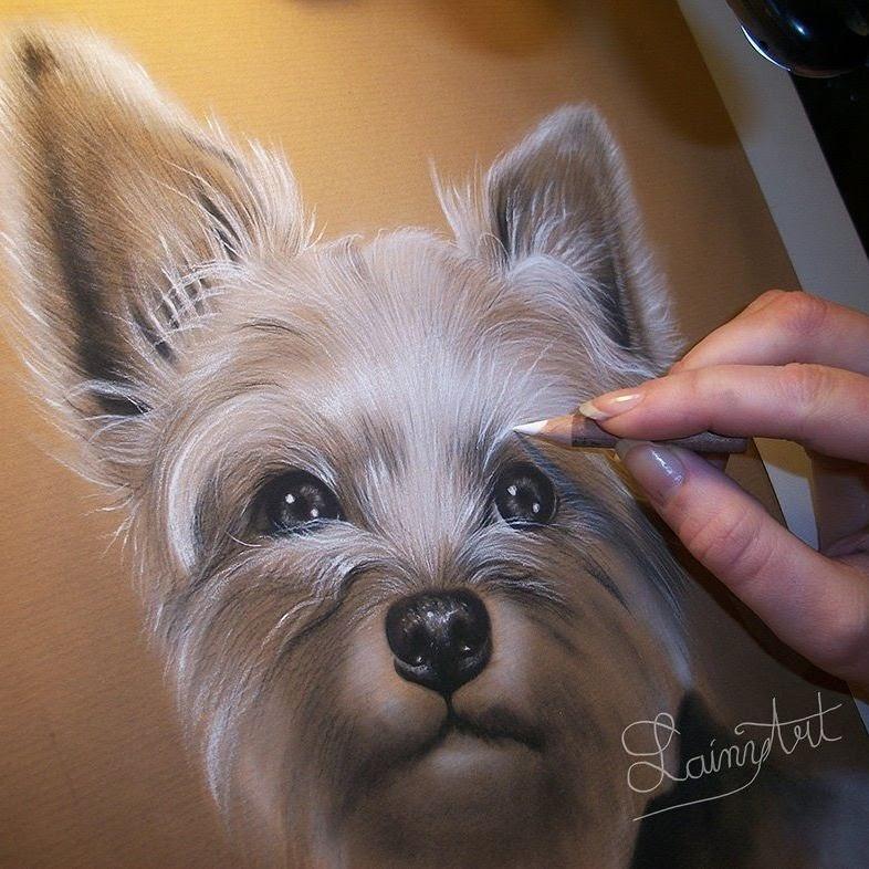 10-Yorkshire-Terrier-Yorkie-Alaina-Ferguson-Animal-Portraits-Cats-Dogs-and-a-Guinea-Pig