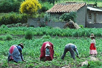 Foto de personas trabajando en agricultura en la sierra