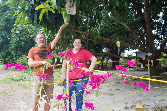 Rosa Farm Giant Mango