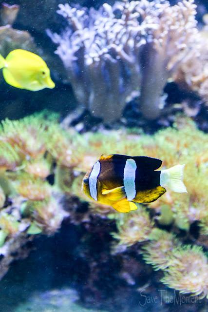 Aquarium Luisenpark Mannheim Anemonenfisch
