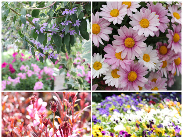 Corone di fiori e molto altro... una giornata a Viridea