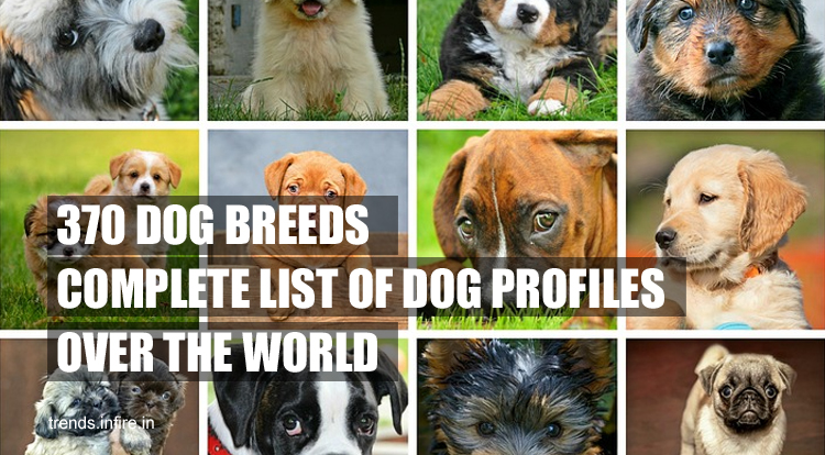 All Dog Breeds, Full List of Dogs