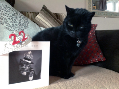 black cat with birthday card