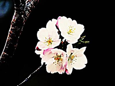 E.MARINELLA NAPOLI イーマリネッラ ナポリ レトロ ファッション イタリア シャツ ネクタイ セレクト プレゼント シンプル エレガント 手巻き 機械美 ユニタス 懐中時計