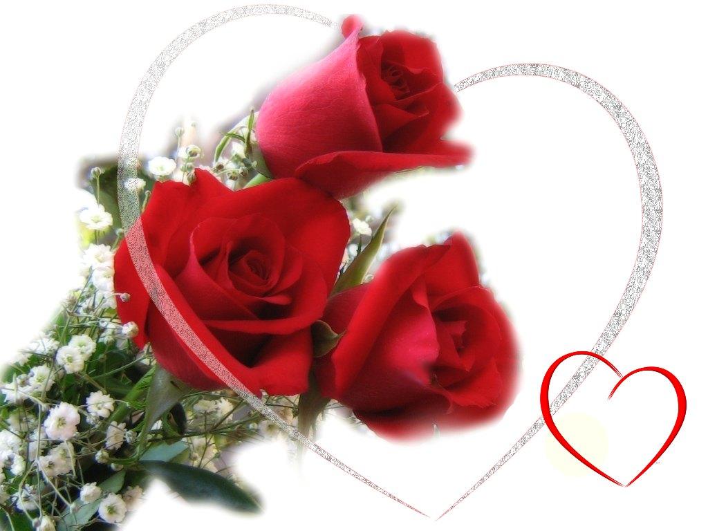 flower photos rose and valentine
