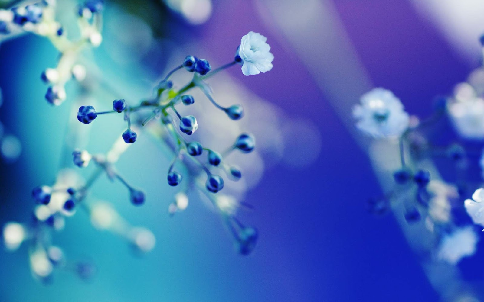 Free 3D Wallpapers Download  Blue Flowers Close Up Wallpapers Blue Flowers Close Up Wallpapers