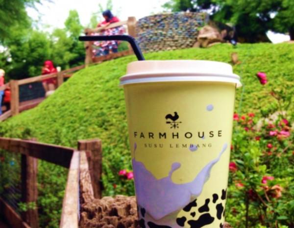Beli Tiket dapat susu gratis di Farm House Susu Lembang