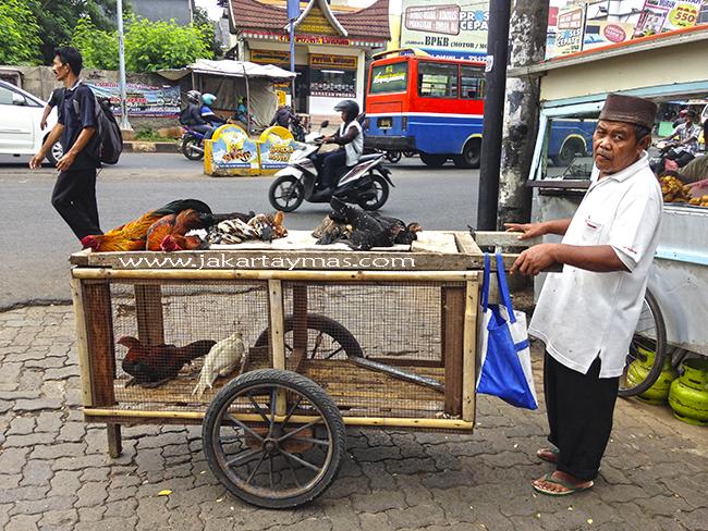 Vendedor ambulante de gallinas vivas en Yakarta