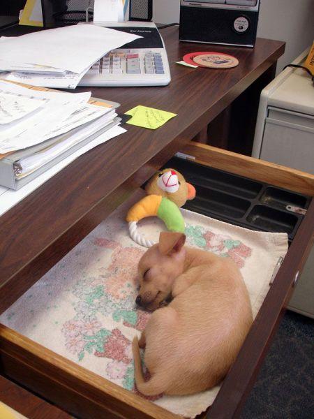 Cachorro de perro durmiendo en cajón.