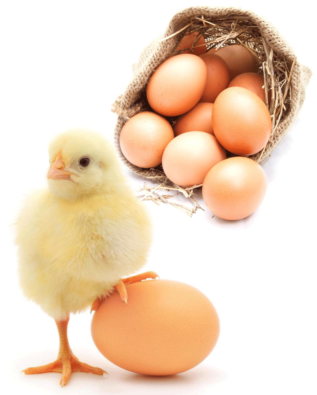 Яйчен Протеин-Egg Protein при диети за отслабване