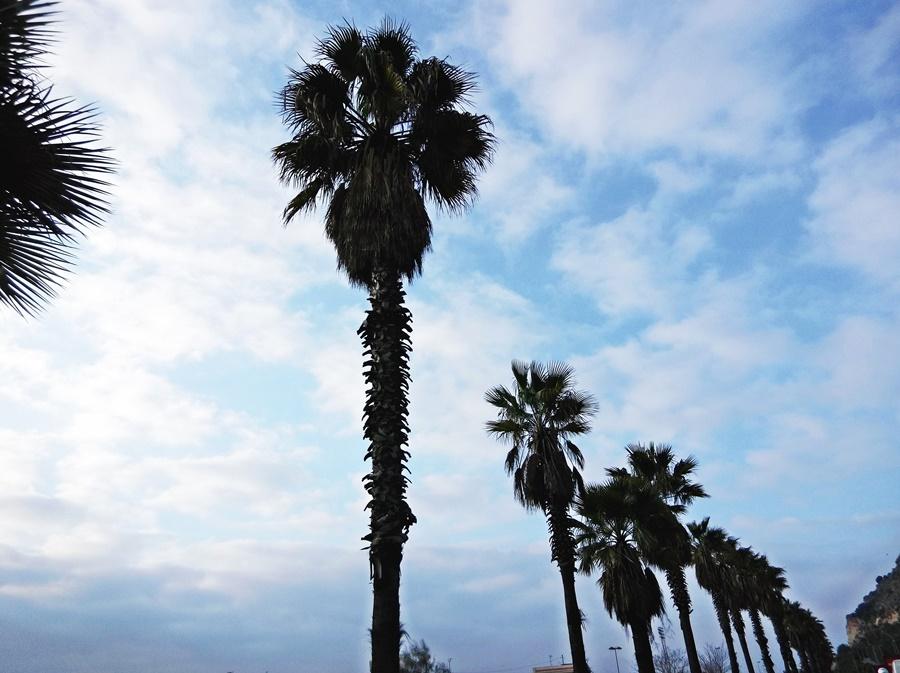 palms miami los angeles sun summer barcelona