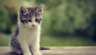 تفسير حلم قتل القط في المنام