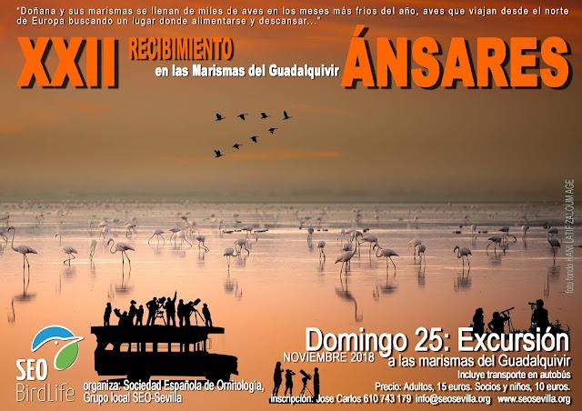 XXII Recibimiento a los Ánsares, Edición 2018. Grupo local SEO-Sevilla.