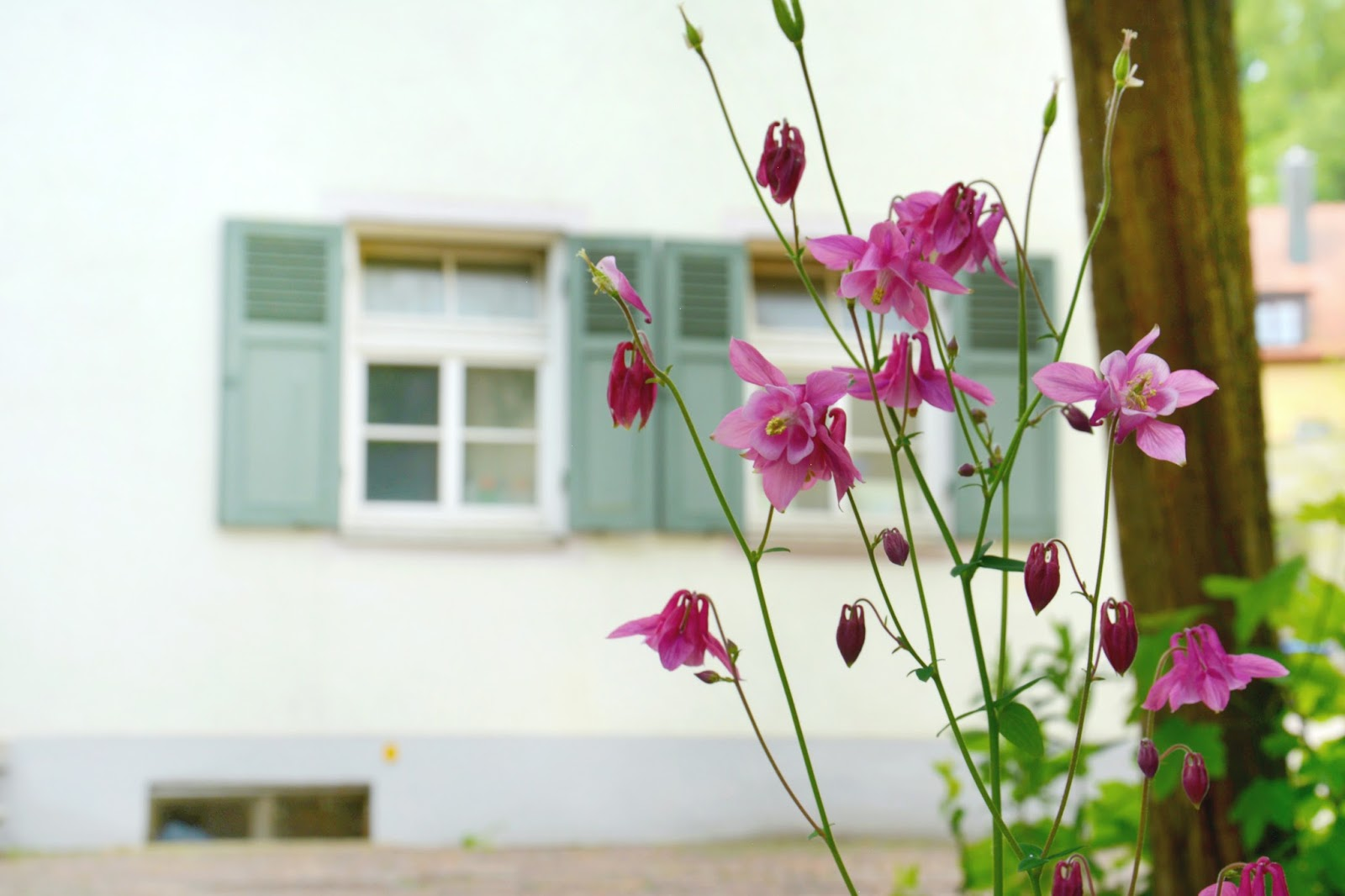 Flowers in front of a House in Biberach, Germany