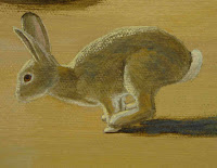 desert cottontail rabbit,bunny,hop,hippity-hopping