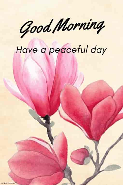 good morning have a peaceful day card
