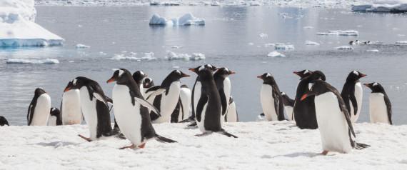 Το μεγαλύτερο θαλάσσιο πάρκο στον κόσμο θα δημιουργηθεί στην Ανταρτική
