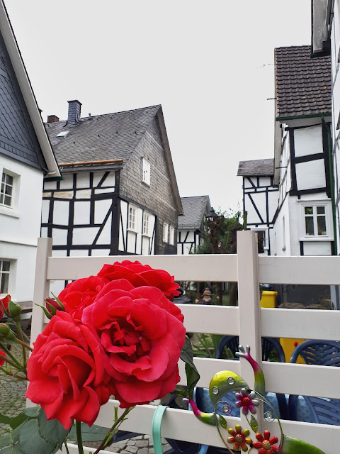 a rose in the streets of fachwerk haus town Freudenberg