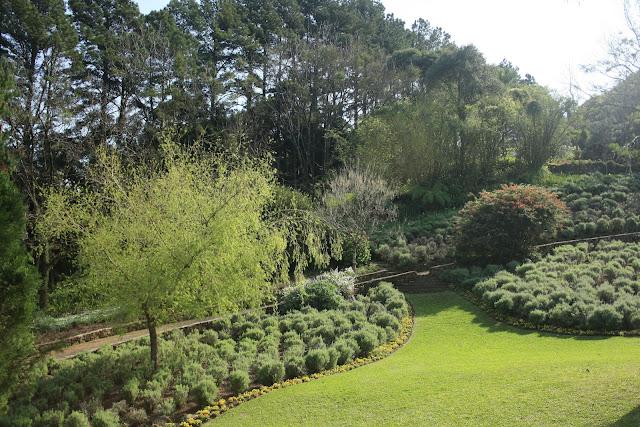 Parte do Jardim de Lavanda em Gramado