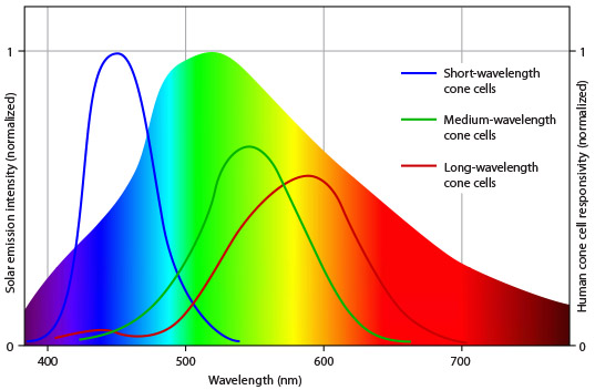 What Color Light Are Our Eyes Most Sensitive To