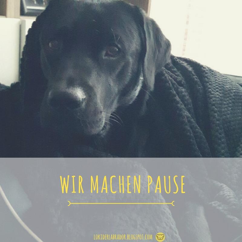 Schwarzer Labrador im Körbchen