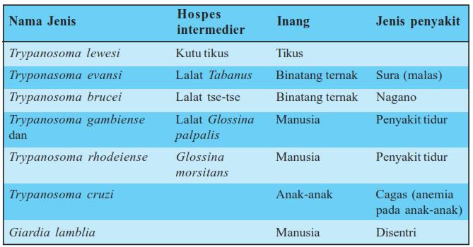 Zooflagellata pada hewan dan manusia, bakteri protista, ciri protista, contoh protista, protista jamur