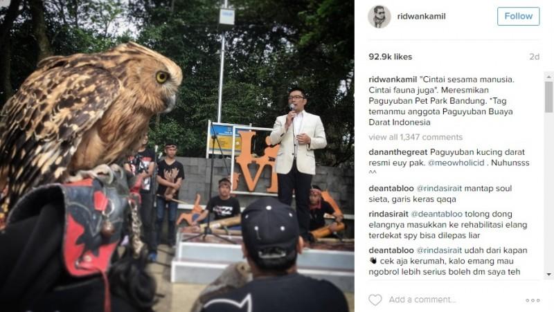 Ridwan Kamil pamer foto burung hantu