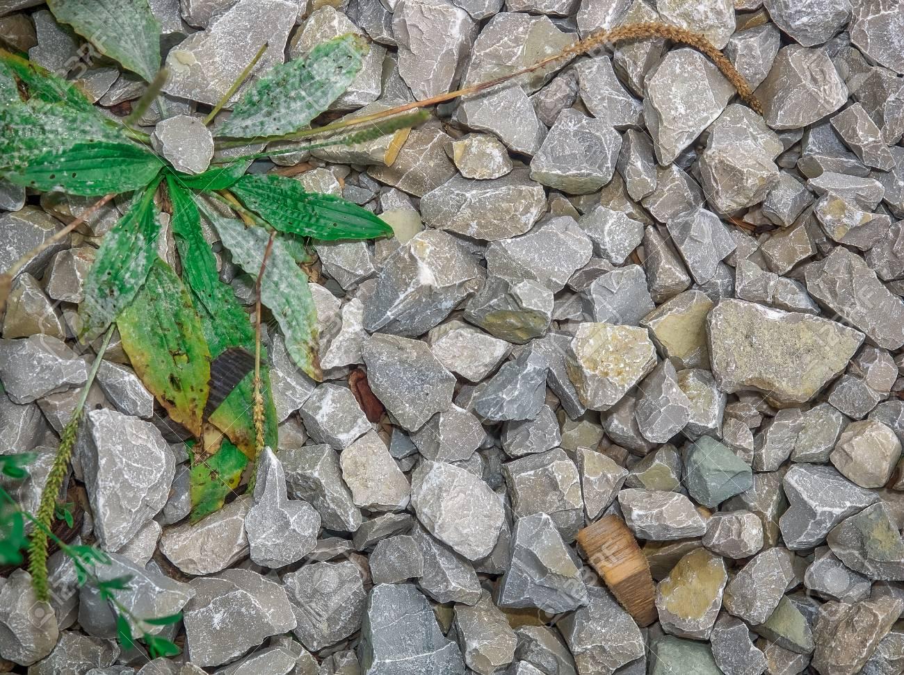 ネット用語「草」の反対語「石」「ちょっと石」の意味って何?なんJ民と2ちゃん民が流行らそうとしている言葉