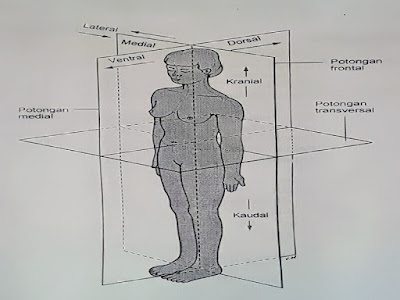 Gambar Fisiologi Anatomi Permukaan Pada Tubuh Manusia