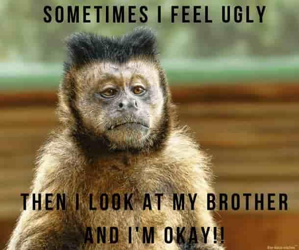 good morning monkey meme