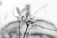 http://fineartfotografie.blogspot.de/2014/04/fruhling-in-berlin.html