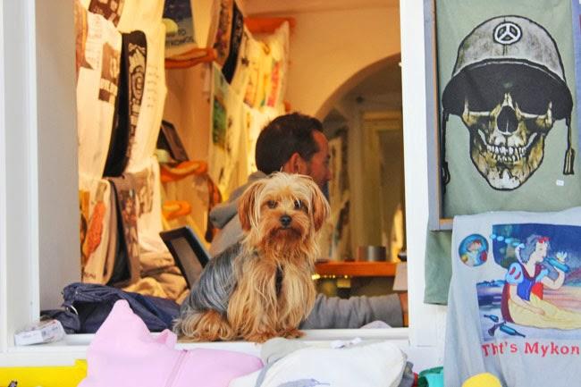 Chora Mykonos town cute dogs