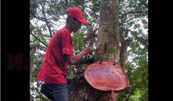 Petugas memasang papan nama pohon di Alun-alun