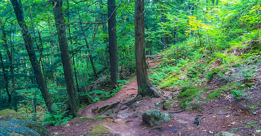 St Peters Dome Trail