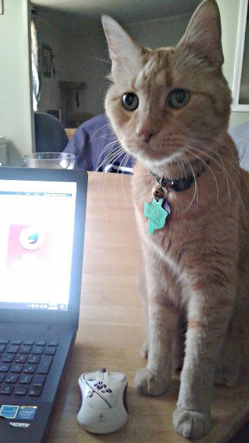 Morris... Staring.
