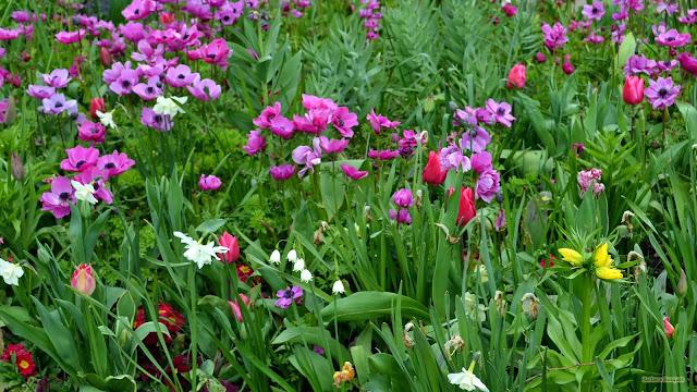 Tuin met veel paarse bloemen