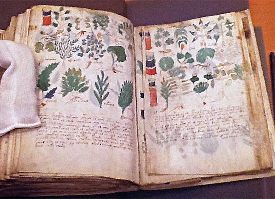 Manuscrito Voynich - Img 1