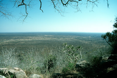South Africa, Kruger National Park, landscape, safari