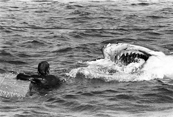 21 Amazing Behind the Scenes Photos From the Making of Jaws 1975  vintage everyday