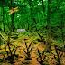 Green Woods Kangaroo Rescue