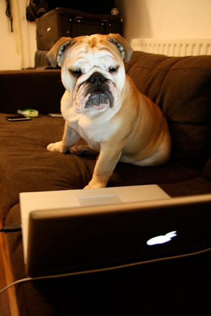 perro y ordenador