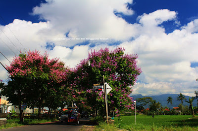 The Flowers Tunnel on Laswi Street in Tasikmalaya, West Java
