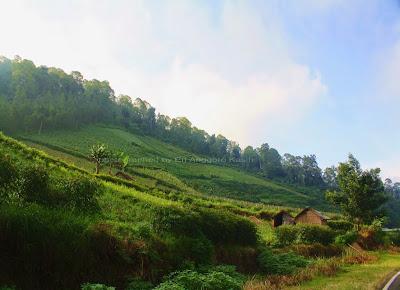 Pemandangan sekitar Cemoro Lawang