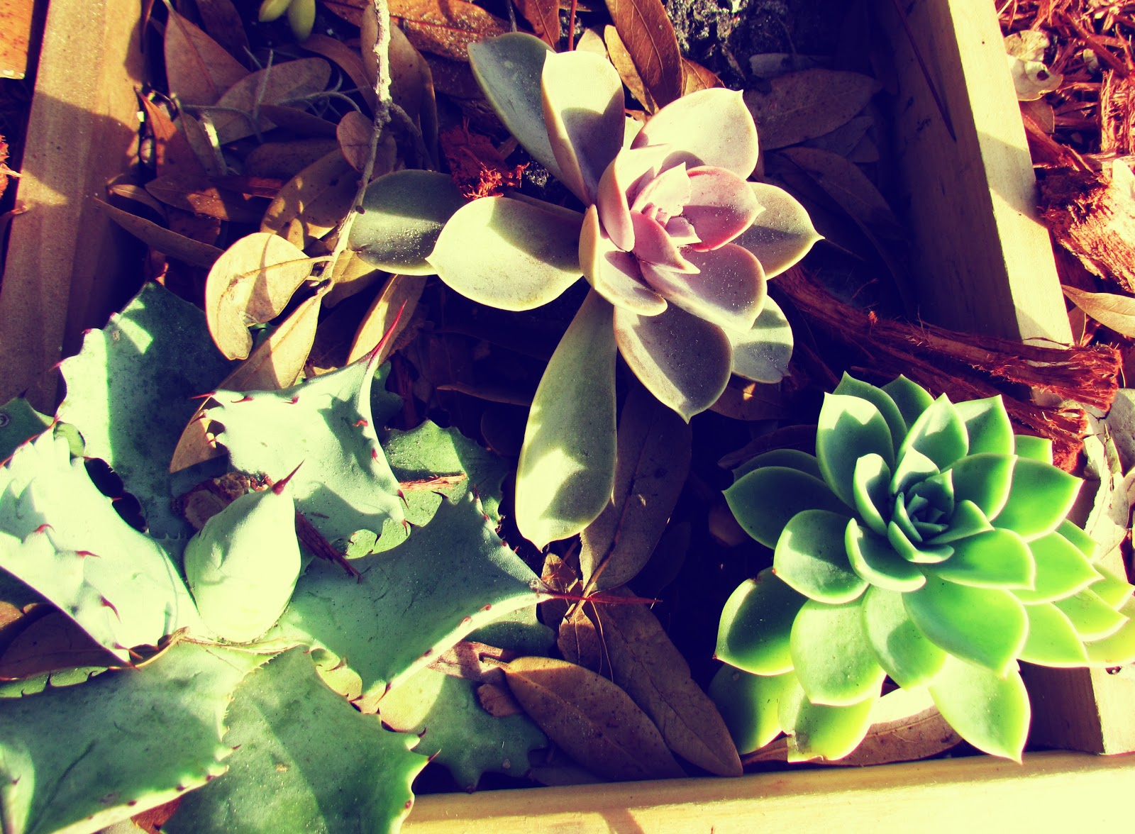 Succulent Plant Life in a Container Garden Urban Gardening Setting