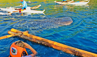 Oslob Cebu Whale Shark Watching