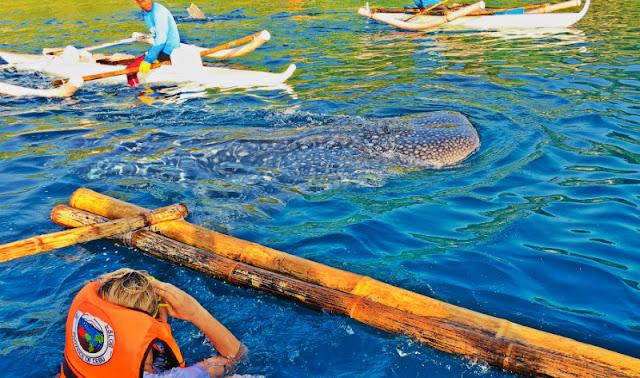Oslob Whale Shark Watching - Oslob, Cebu