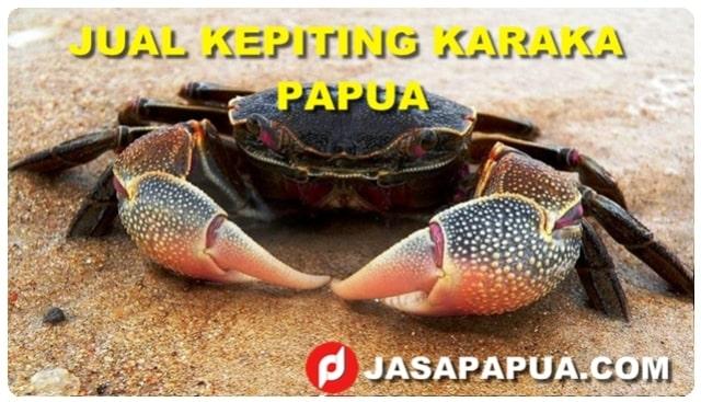 JUAL KEPITING KARAKA PAPUA, TEMPAT KEPITING KARAKA PAPUA, HARGA KEPITING KARAKA