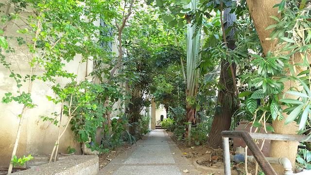 כניסה מלאה בצמחים ירוקים בבניין ברחוב ארנון